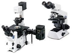 オリンパス 顕微鏡